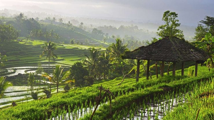 Rice Terraces - Sixty and Me